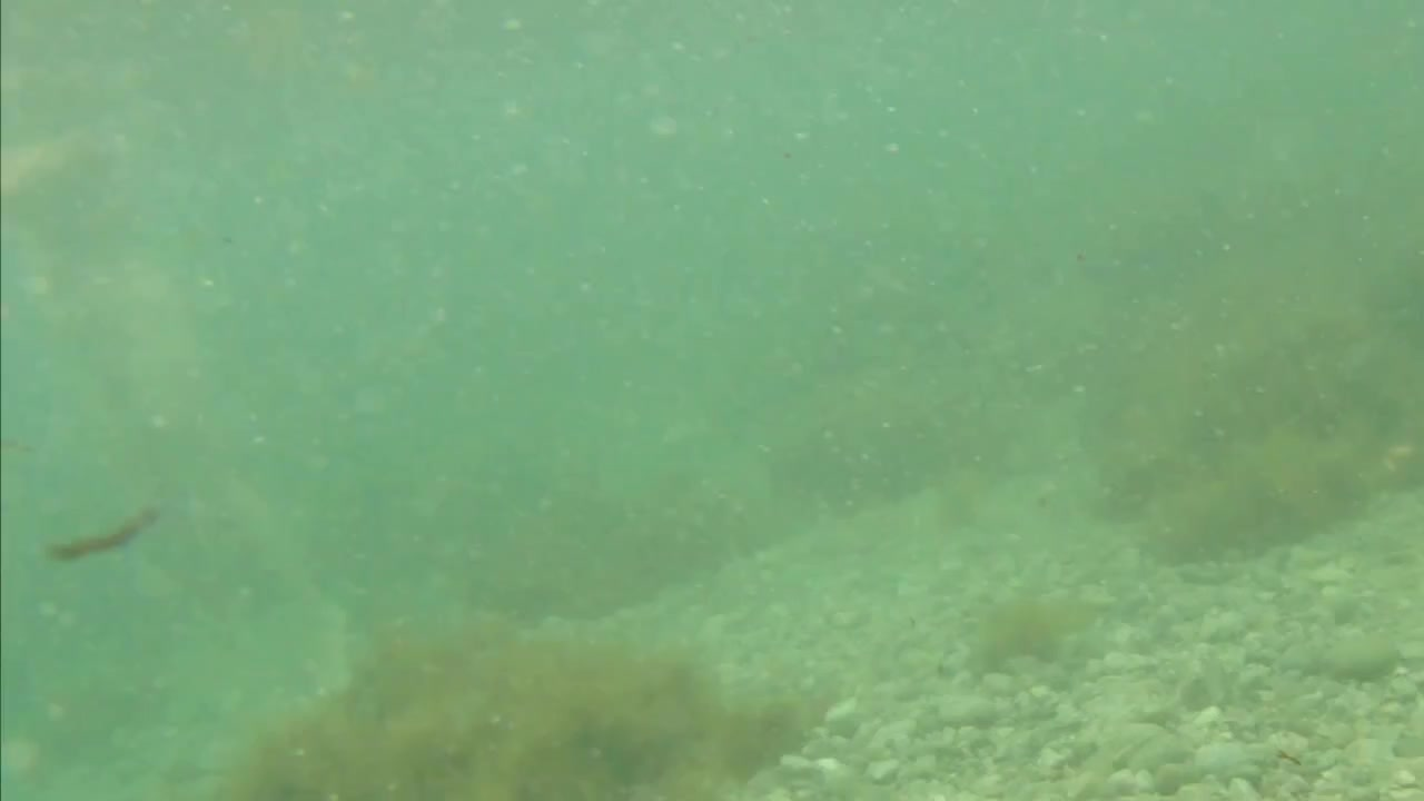 naked woman underwater 1